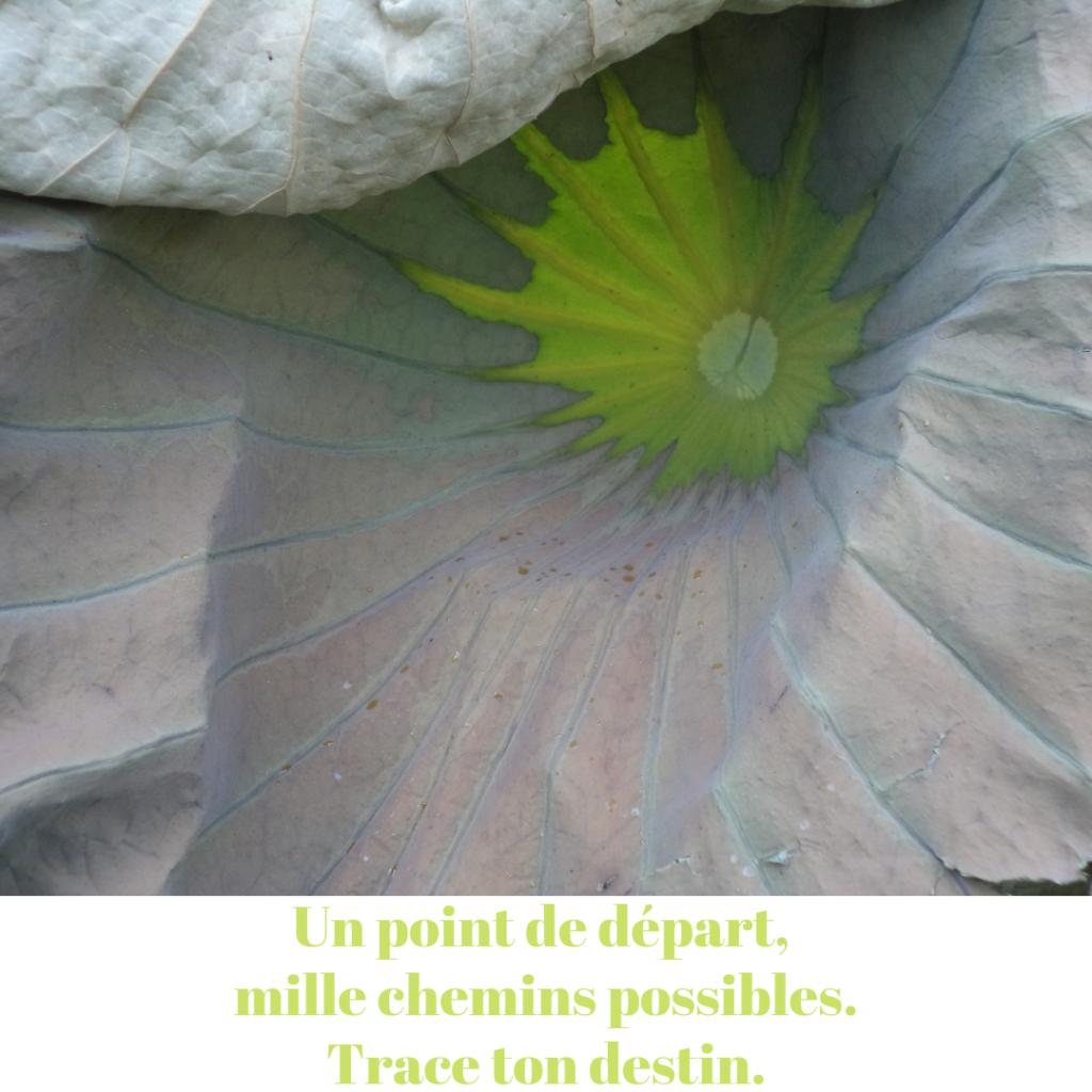 Géométrie végétale